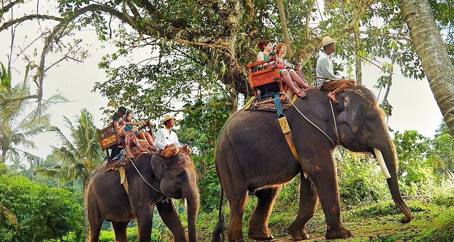 Bali Elephant Ride Tour Bali Private Driver And Tour Service Start From Usd 27 All Inclusive